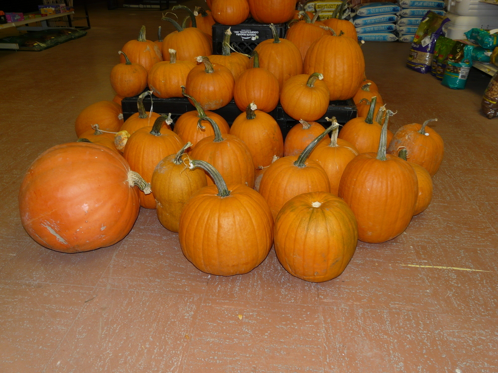 "Third Annual ""All Things Pumpkin"" is planned"
