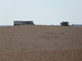Harvest was good, but drought may be on the horizon